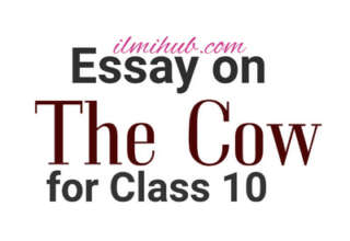 The Cow Essay in English, Essay on the Cow for Class 10, The Cow Essay for 10th Class